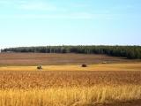 В Иркутской области создадут информационную базу о наличии кормов в районах